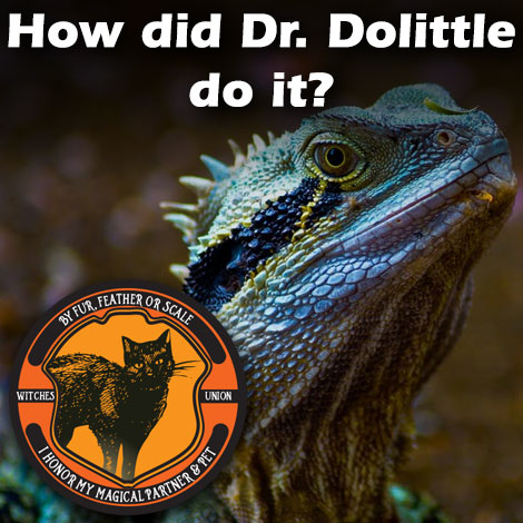 Retail blog 2 How did Dr Dolittle do it